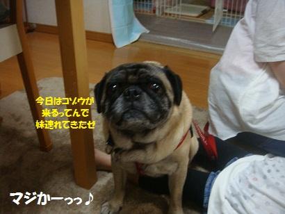 DSC00591_20121211001048.jpg