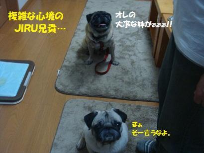 DSC00601_20121212133546.jpg