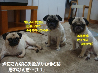 DSC00634_20120726180932.jpg