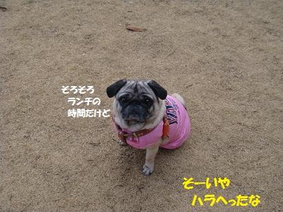 DSC00759.jpg