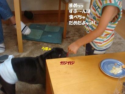DSC00855_20121216001253.jpg
