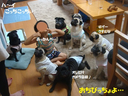 DSC00927_20121215234625.jpg