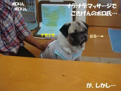 DSC00932_20120801034532.jpg