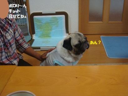 DSC00934_20121215235050.jpg