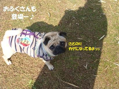 DSC00957_20120815123108.jpg