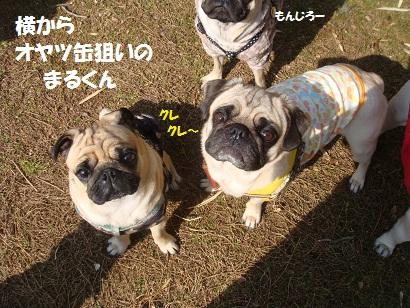 DSC00960_20120815123107.jpg