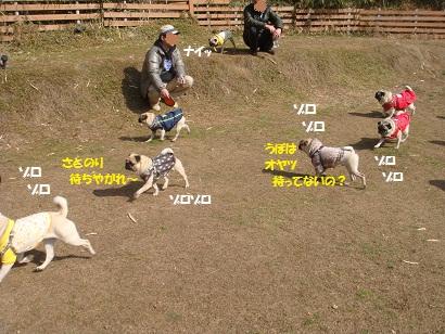 DSC00995_20120815162818.jpg