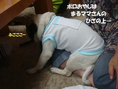 DSC00999_20121216002542.jpg