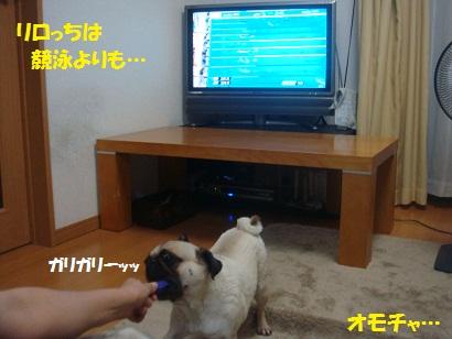 DSC01108.jpg