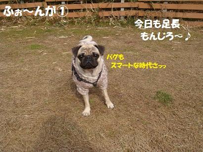DSC01123_20120825164507.jpg
