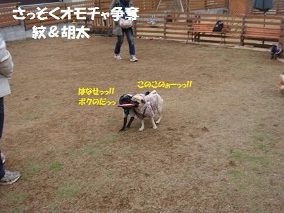 DSC01172_20120824000210.jpg