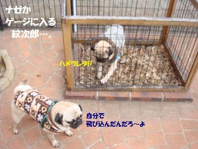 DSC01323_20120826144102.jpg
