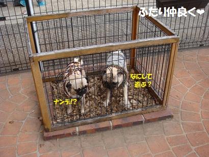 DSC01325_20120826144100.jpg