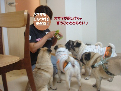 DSC01468_20120805085527.jpg
