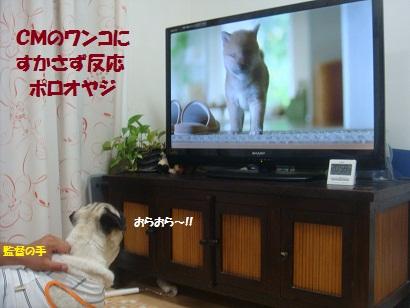 DSC01471_20120805122202.jpg