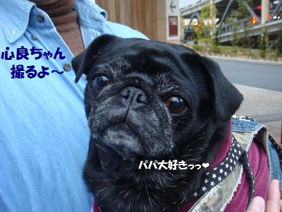 DSC01530_20120827193804.jpg
