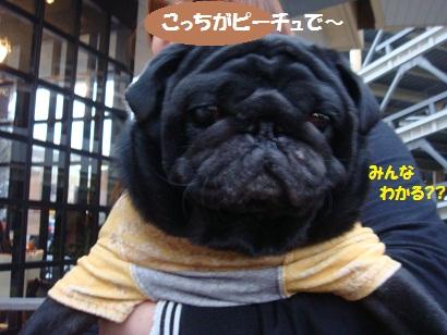 DSC01536_20120827193803.jpg