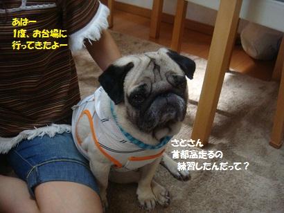 DSC01540_20121230164906.jpg