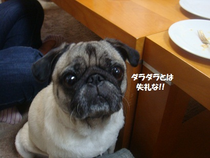 DSC01569_20121230165845.jpg