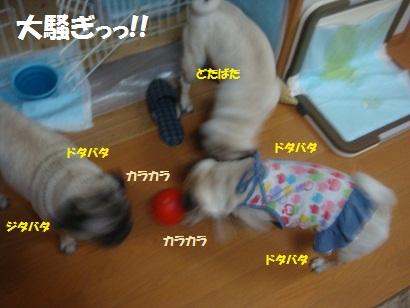 DSC01606_20121230162842.jpg