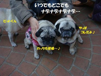 DSC01612_20120827195303.jpg