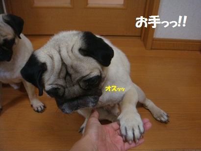 DSC01707_20120814171516.jpg