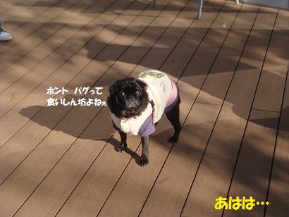 DSC01750_20120902161037.jpg