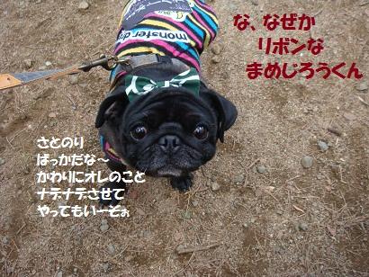 DSC01961_20120821194420.jpg