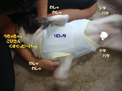 DSC02025_20130106132711.jpg