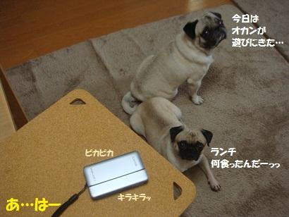 DSC02133_20120922152425.jpg