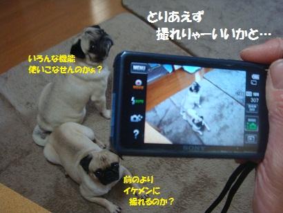 DSC02134_20120922153921.jpg