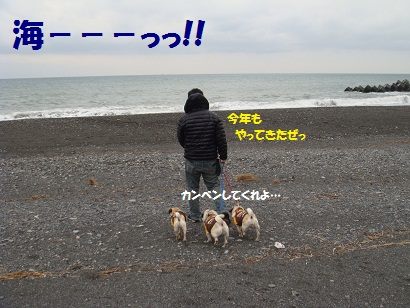 DSC02175_20120905043156.jpg