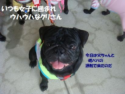 DSC02276_20130110001432.jpg