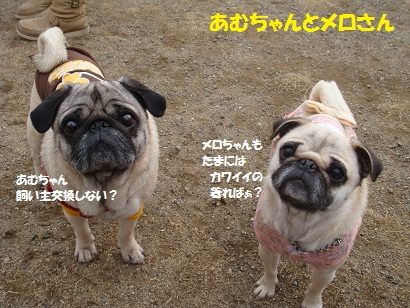 DSC02496_20120912032119.jpg