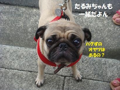 DSC02527_20130112033514.jpg