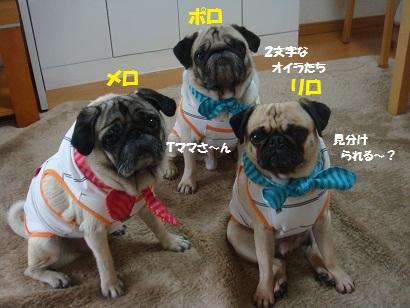DSC02762_20121018211013.jpg
