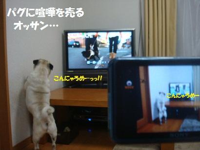 DSC02779.jpg