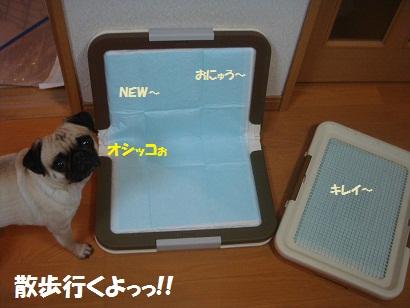 DSC02817_20120926231547.jpg