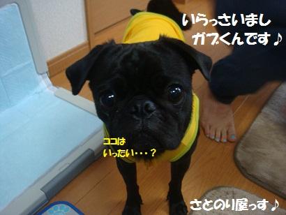 DSC02871_20130117034007.jpg