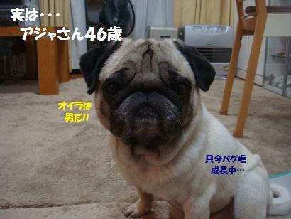DSC03037_20121002192232.jpg
