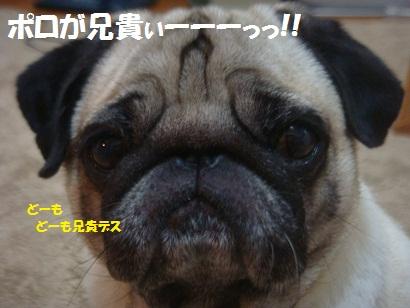 DSC03041_20121002232412.jpg