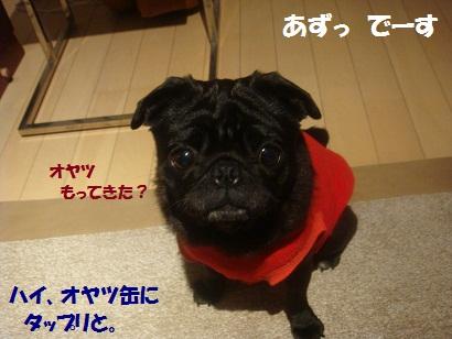 DSC03098_20120912185036.jpg