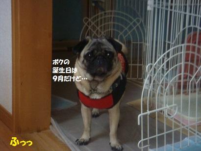 DSC03447_20120923122758.jpg