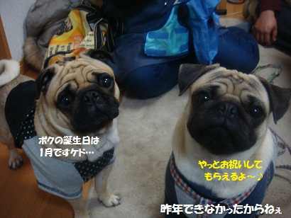 DSC03505_20120923113044.jpg