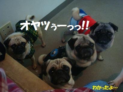 DSC03686_20120926152652.jpg