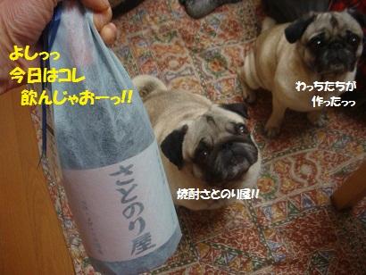 DSC03946_20121201024249.jpg