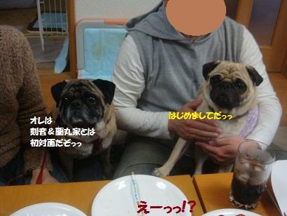 DSC04019_20121001184240.jpg