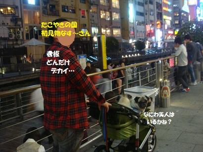 DSC04354_20121012013439.jpg