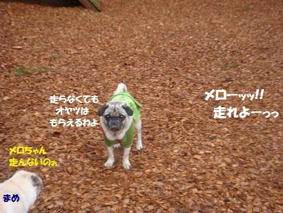 DSC04394_20121014202716.jpg