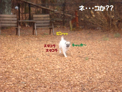 DSC04415_20121014202717.jpg